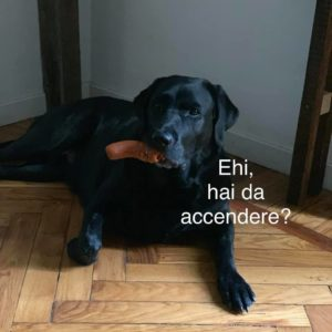 se il tuo cane avesse whatsapp hai da accendere