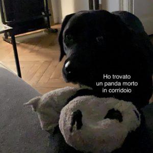 se il tuo cane avesse whatsapp panda morto